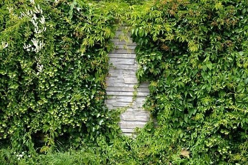betonový plot se zelení