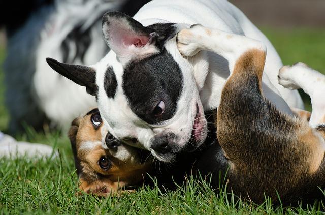 hraní psů